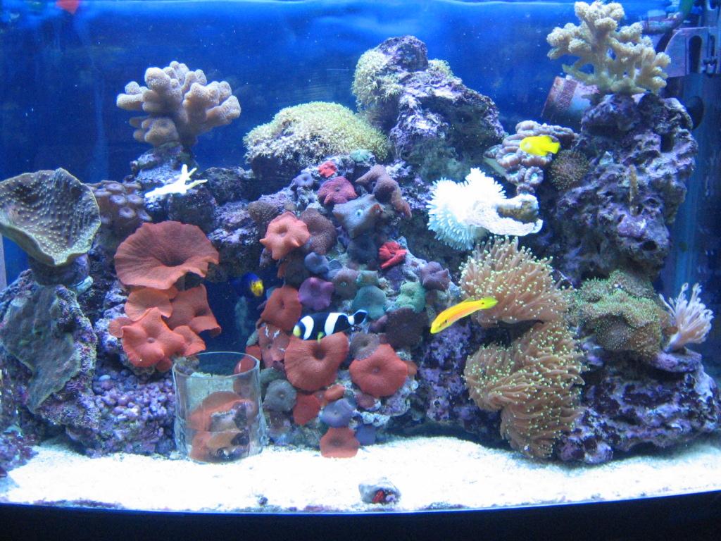 aquari-2_0.jpg
