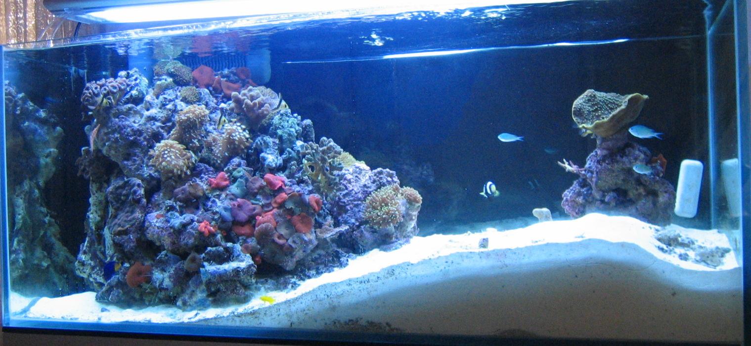 aquari-3_0-full.jpg