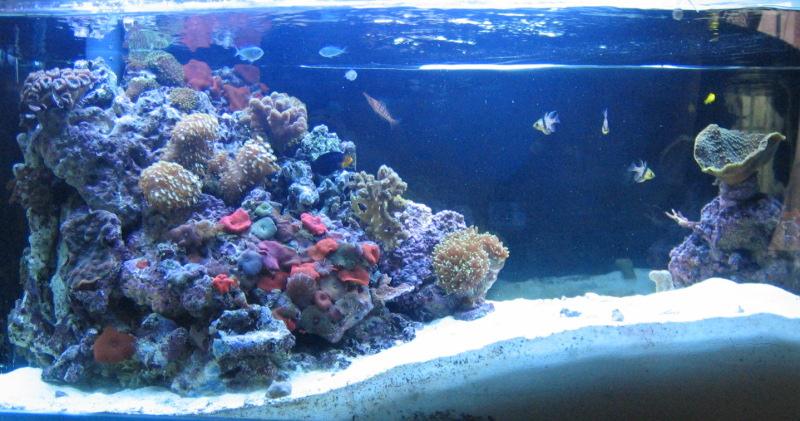 aquari-3_0-full2.jpg