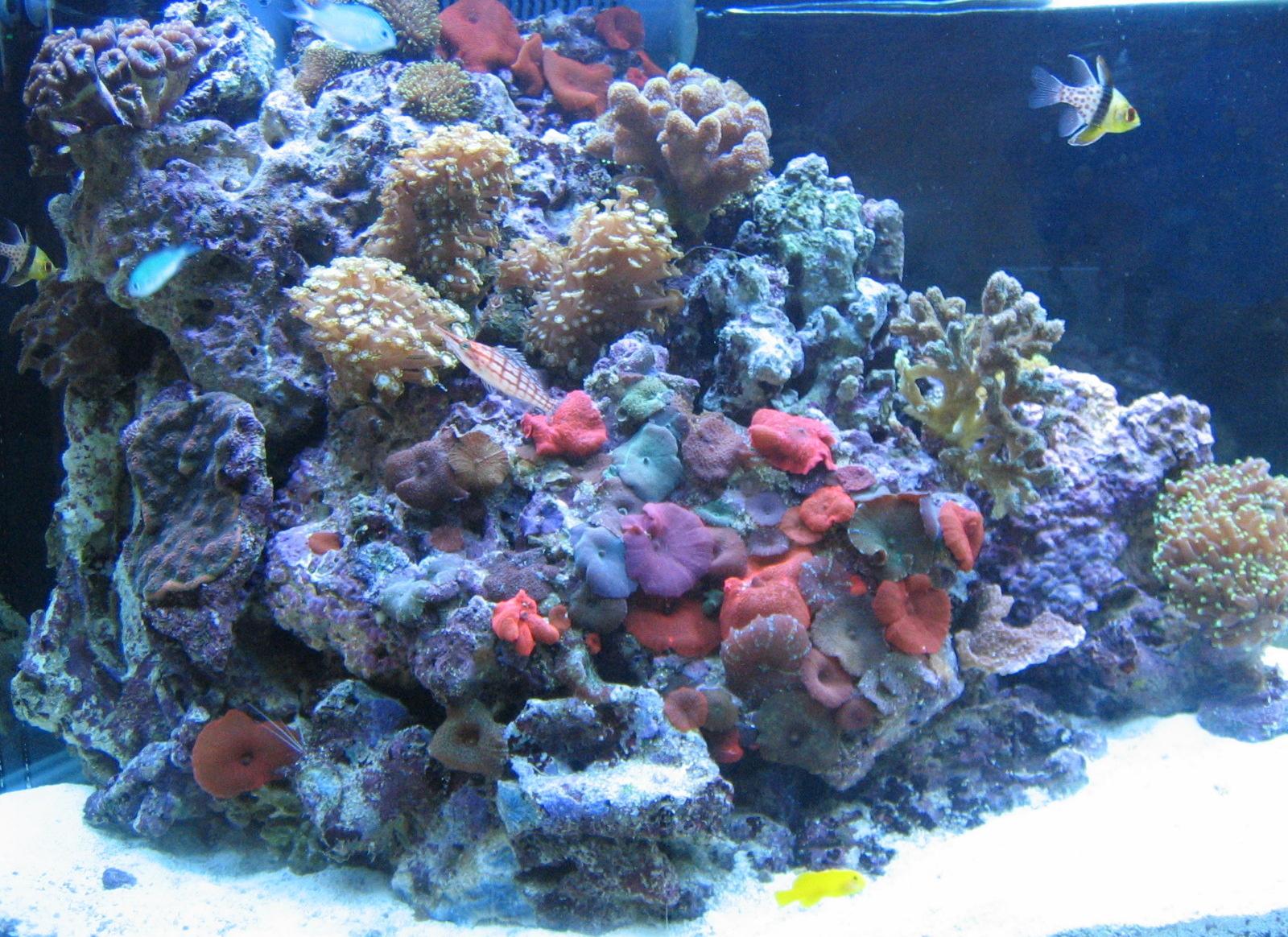 aquari-3_0-reef.jpg