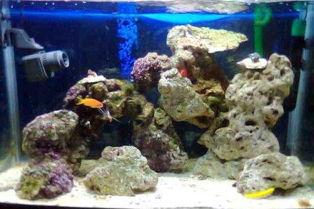 aquari3_retocat1.jpg